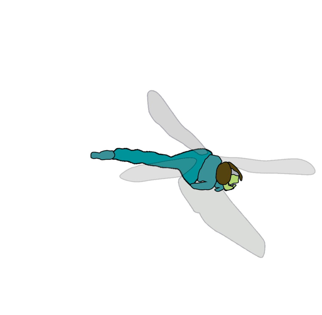 motion study: dragonfly